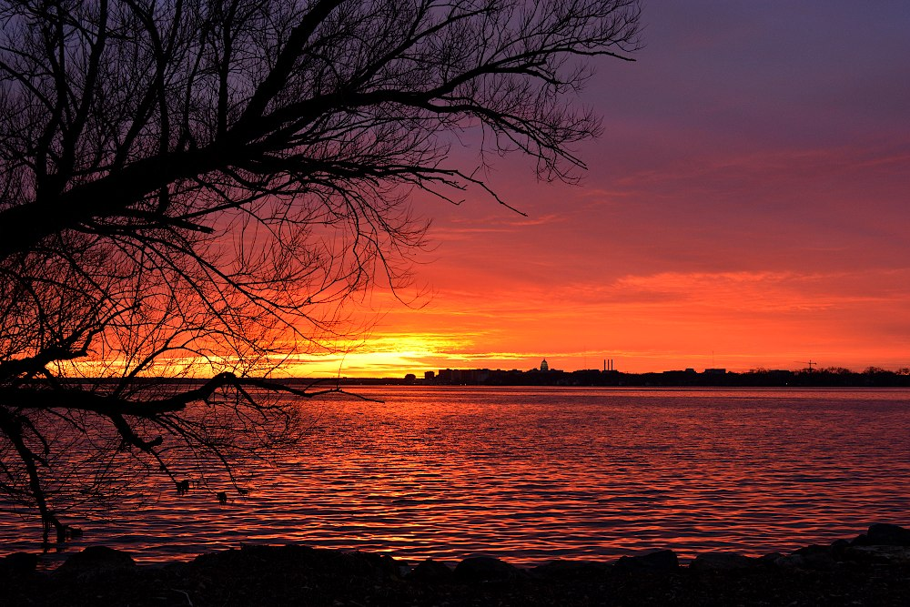 Sunset over a lake, with a tree branch in the foreground and city skyline in the background
