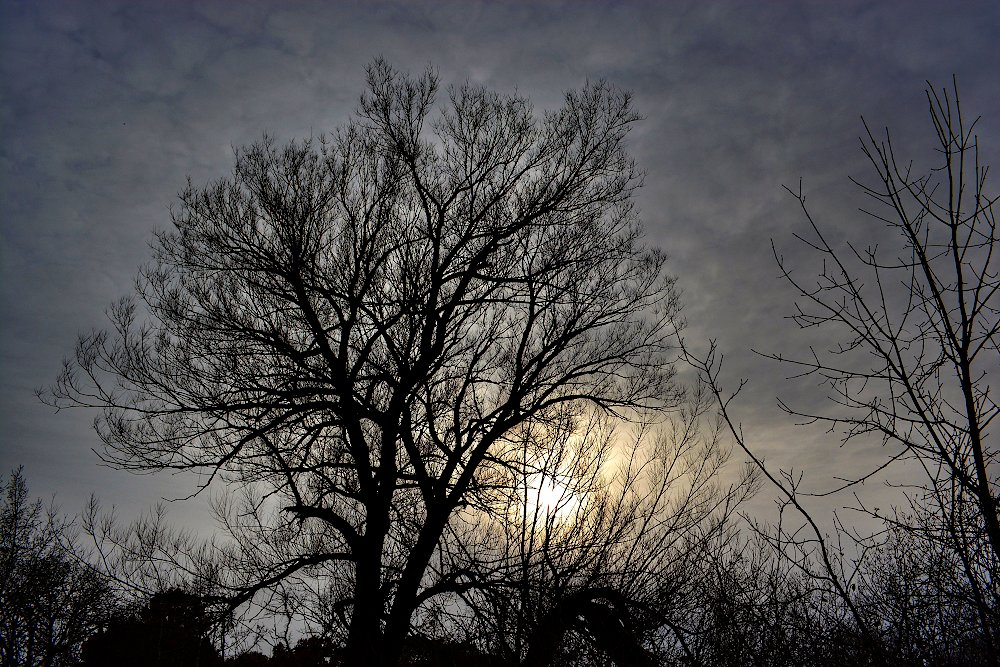 Silhouette of bare trees with the sun barely shining thru a grey sky