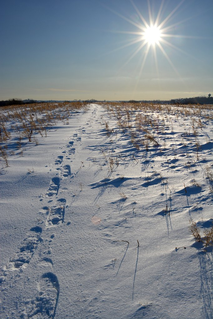 Sun shining down on a prairie with snowshoe tracks