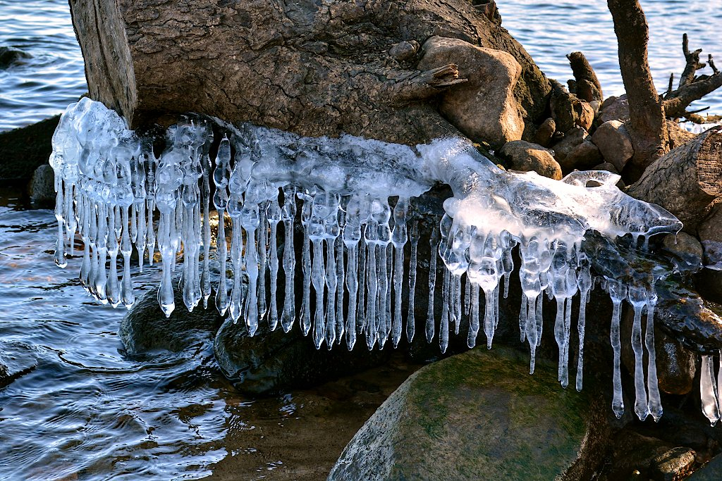 A line of icicles on a large branch of a tree stump on the edge of a river