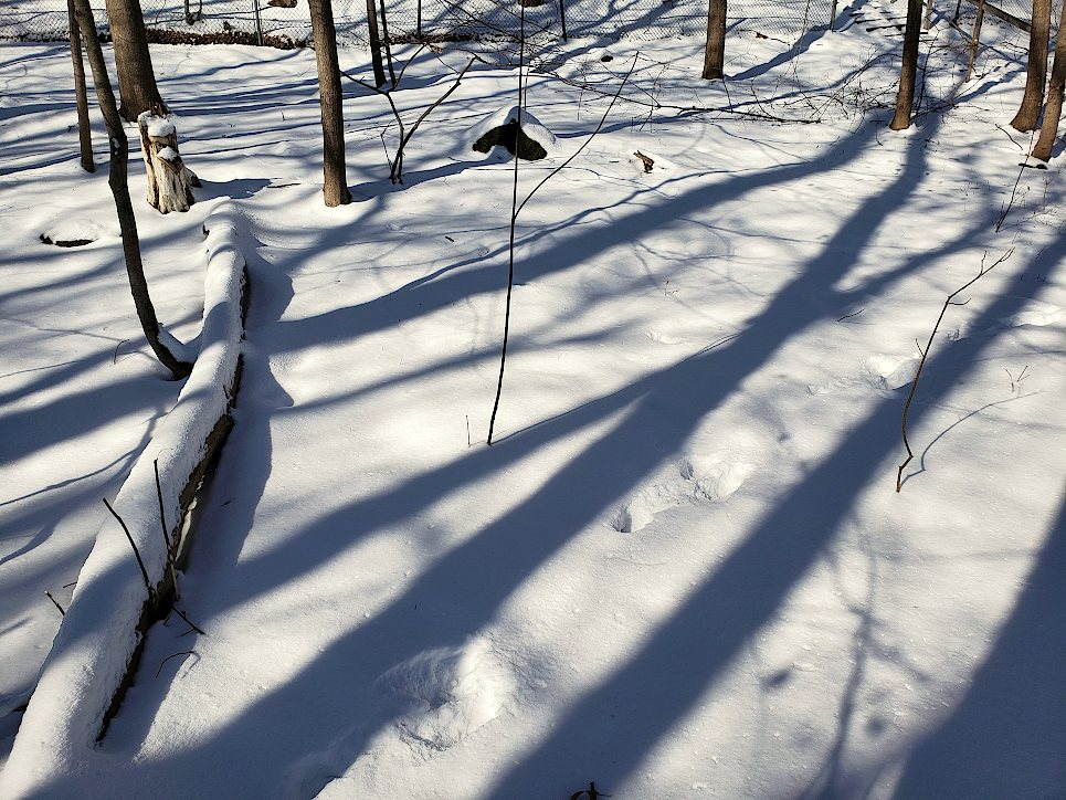 Shadows of trees on a snow covered forest floor