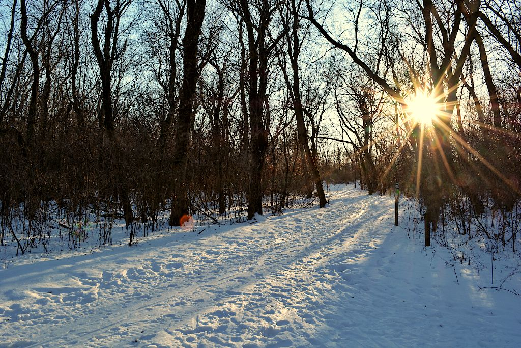 Sun shining through trees along a snow covered trail
