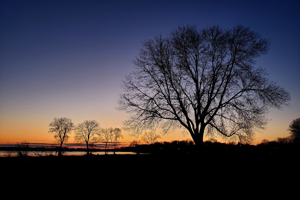Silhouette of trees in front of a dark blue sky with orange on the horizon