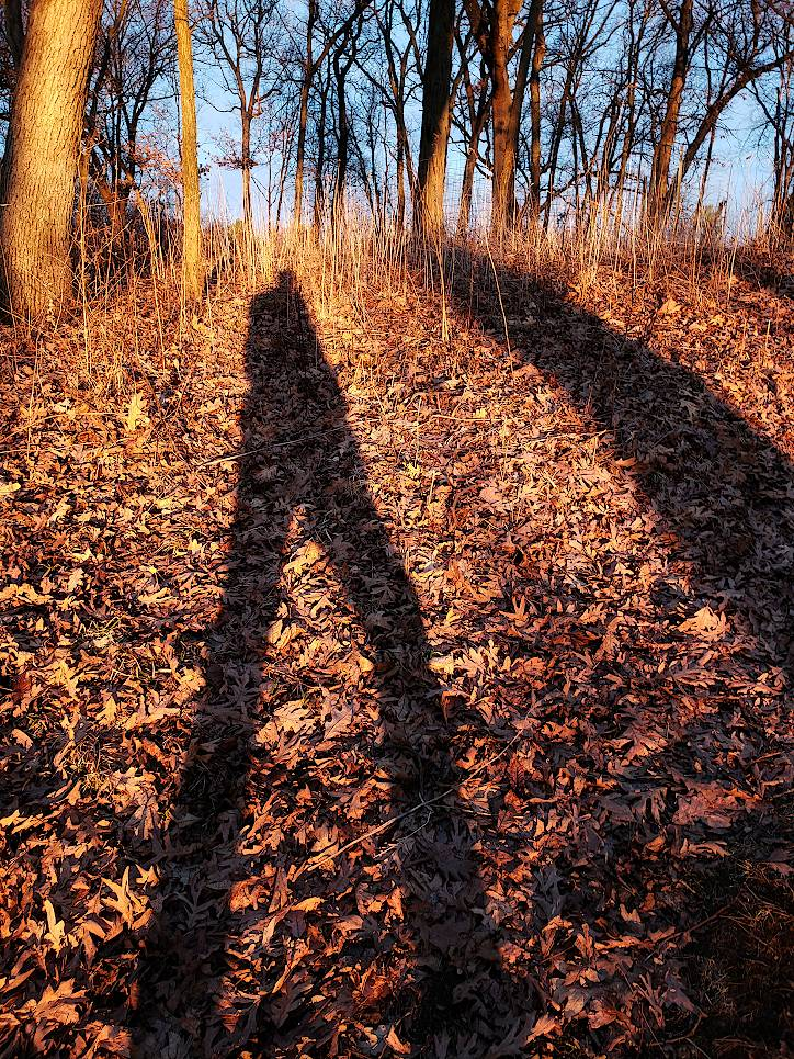 Shadow of a man hiking through the woods during sunset