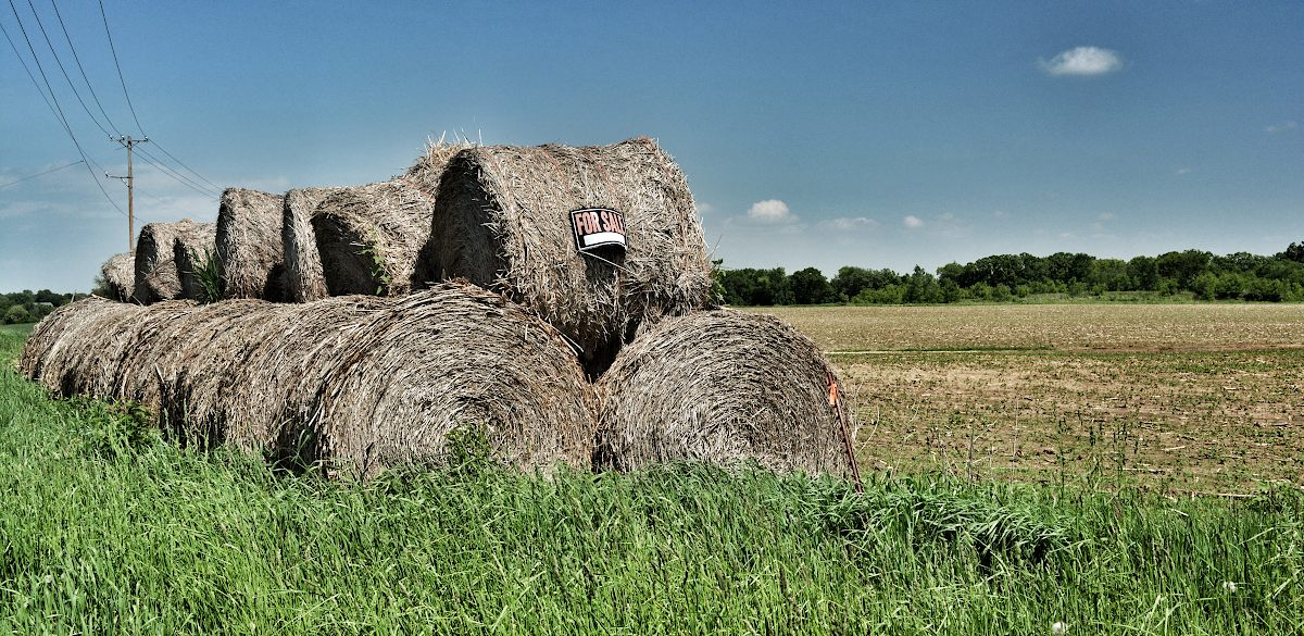 Hay stacked in round bundles on the edge of a farm field with a For Sale sign attached to the first bundle