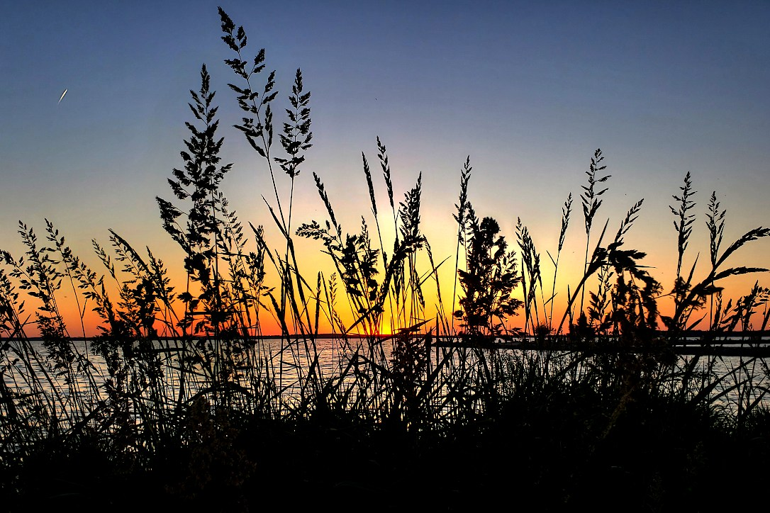 Silhouette of tall grass at the shore of a lake, in front of a glowing sunset on the horizon