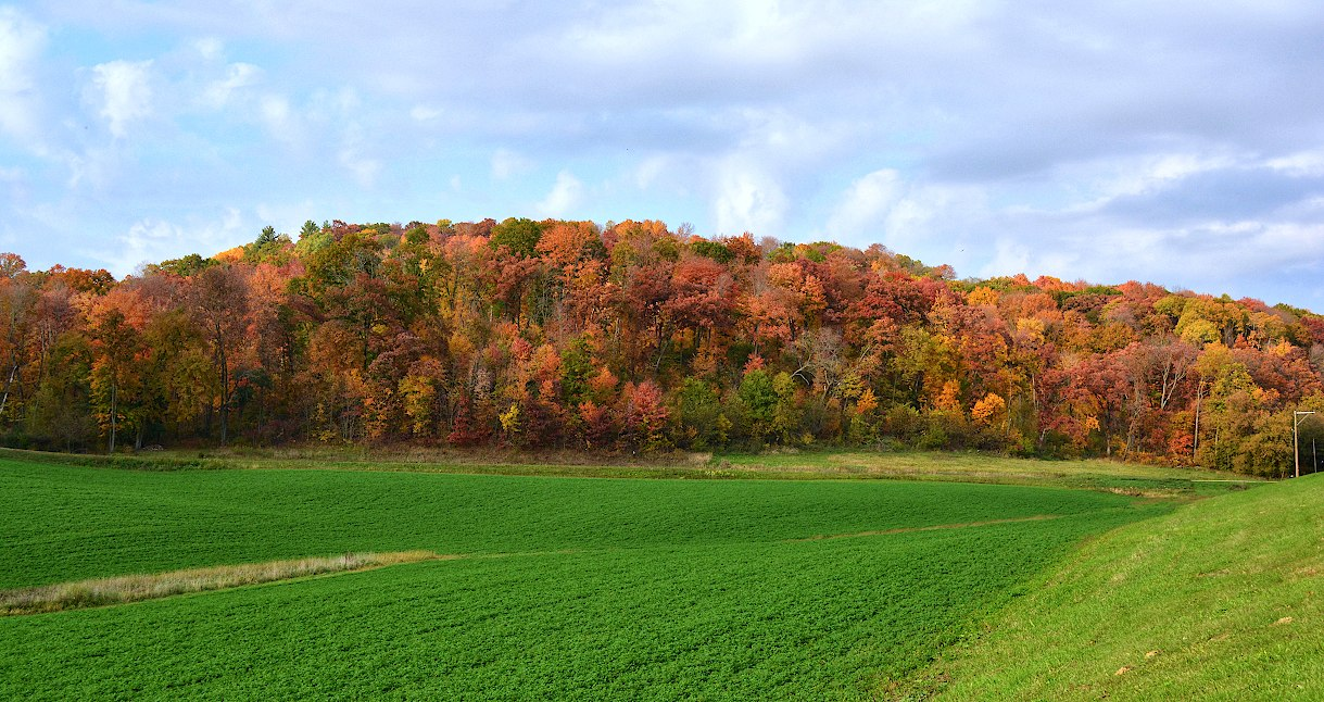 Green field front of a long hill with trees colored yellow, orange, and red
