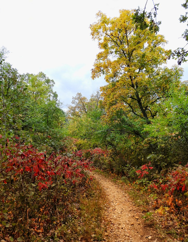 Hiking trail through trees of autumn colors