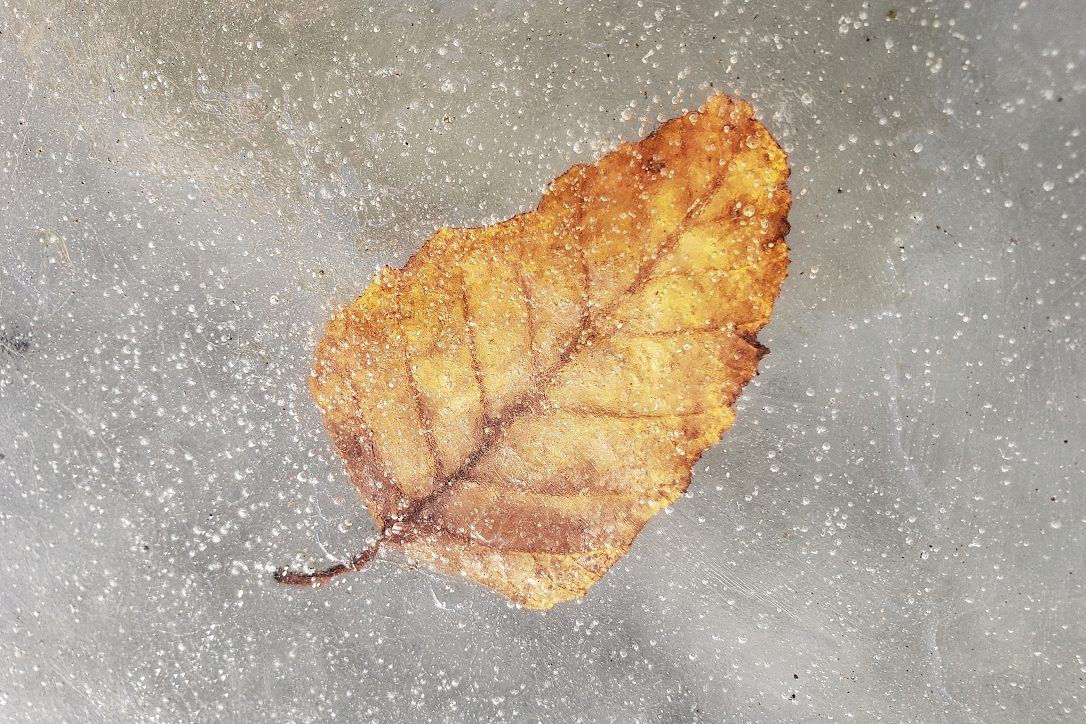 Closeup of a yellow/brown leaf frozen in ice