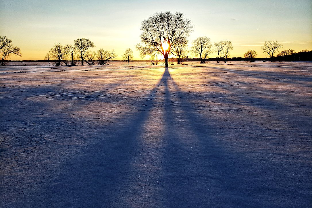 Sun setting behind a tree casting a long shadow on a snow covered field