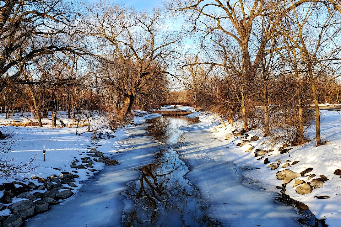 Trees and snow along the banks of a creek that has open water in the middle and ice on the sides