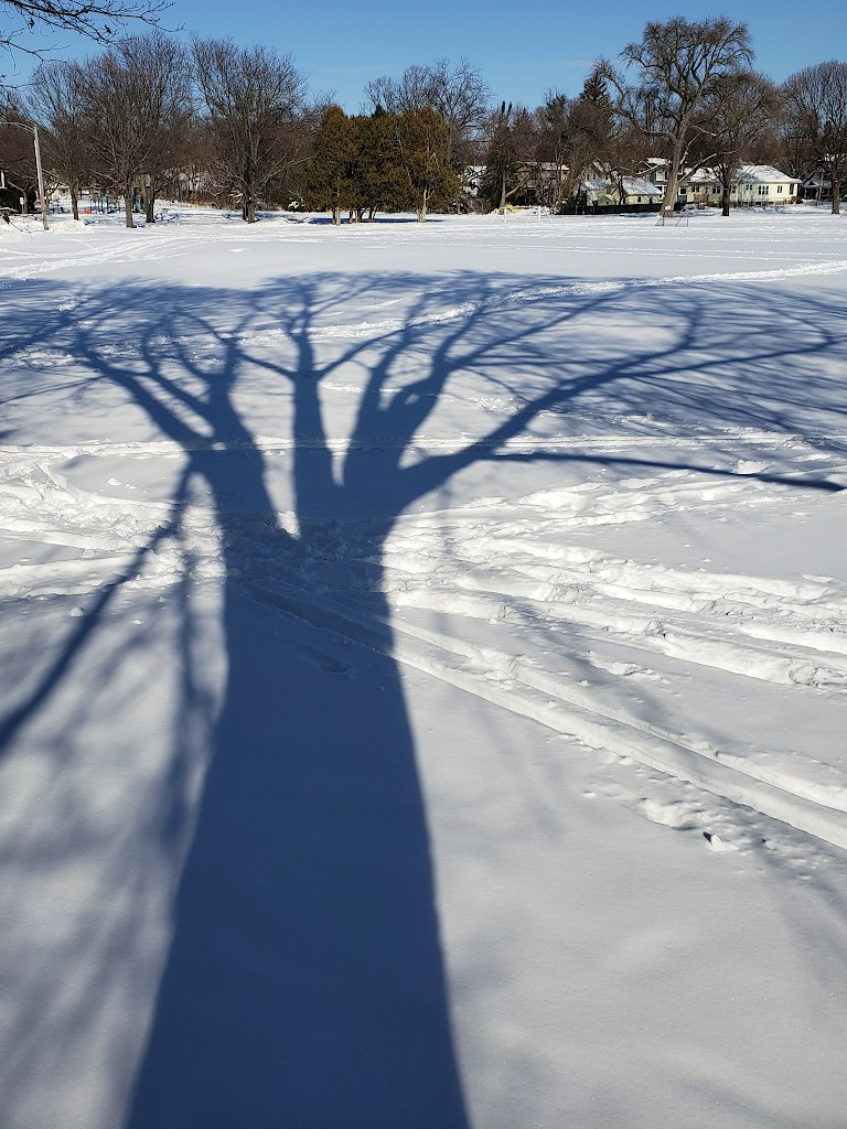 Shadow of a large tree on a bright snow covered field