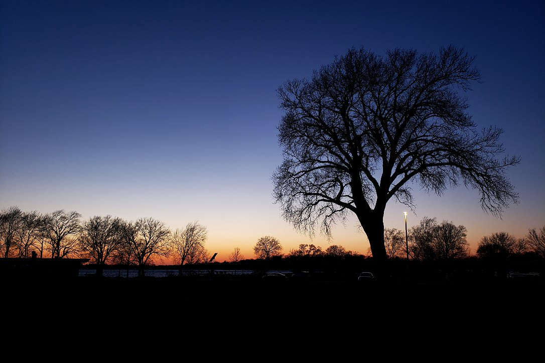 Large tree with bare branches in front of a deep blue sky, with smaller trees along the horizon showing the last orange colors of sunset